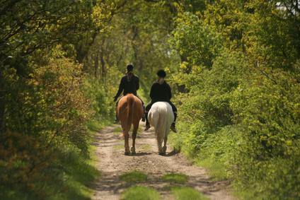 Bienvenue Centre Equestre De Traize